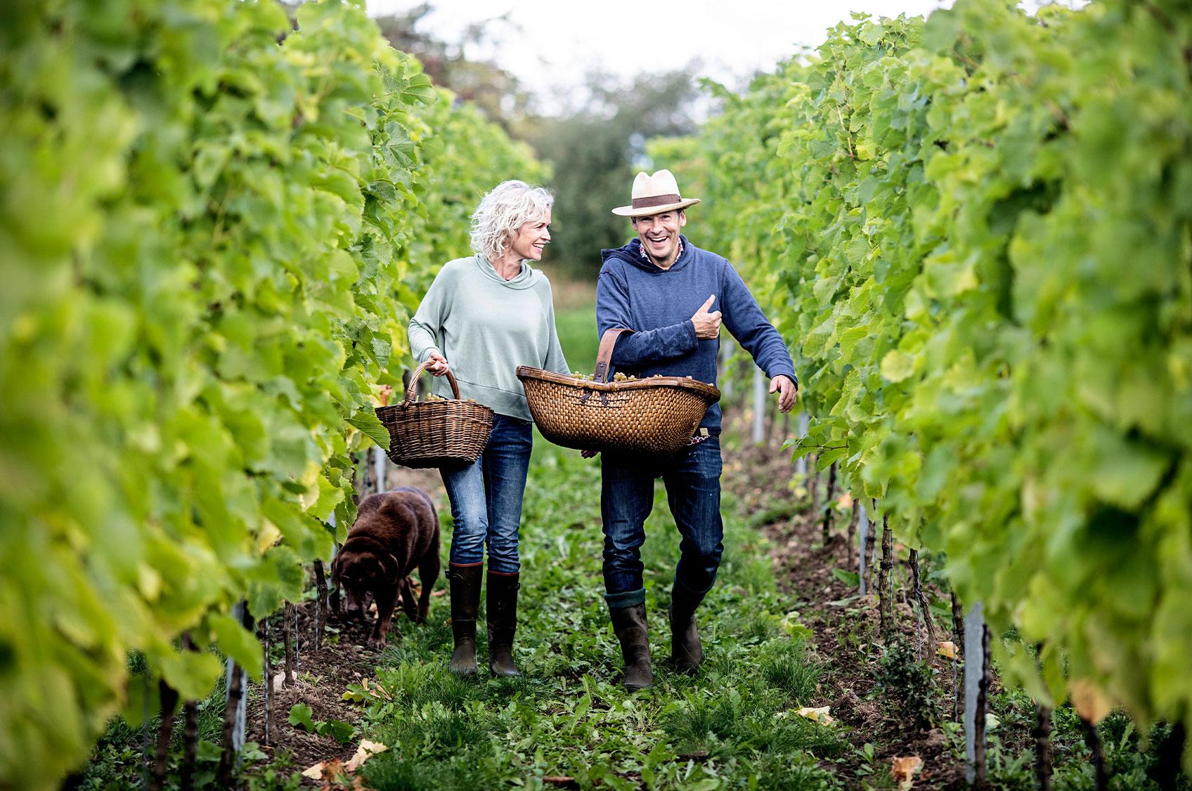 Vinsmagning & rundvisning på Stokkebye vingård