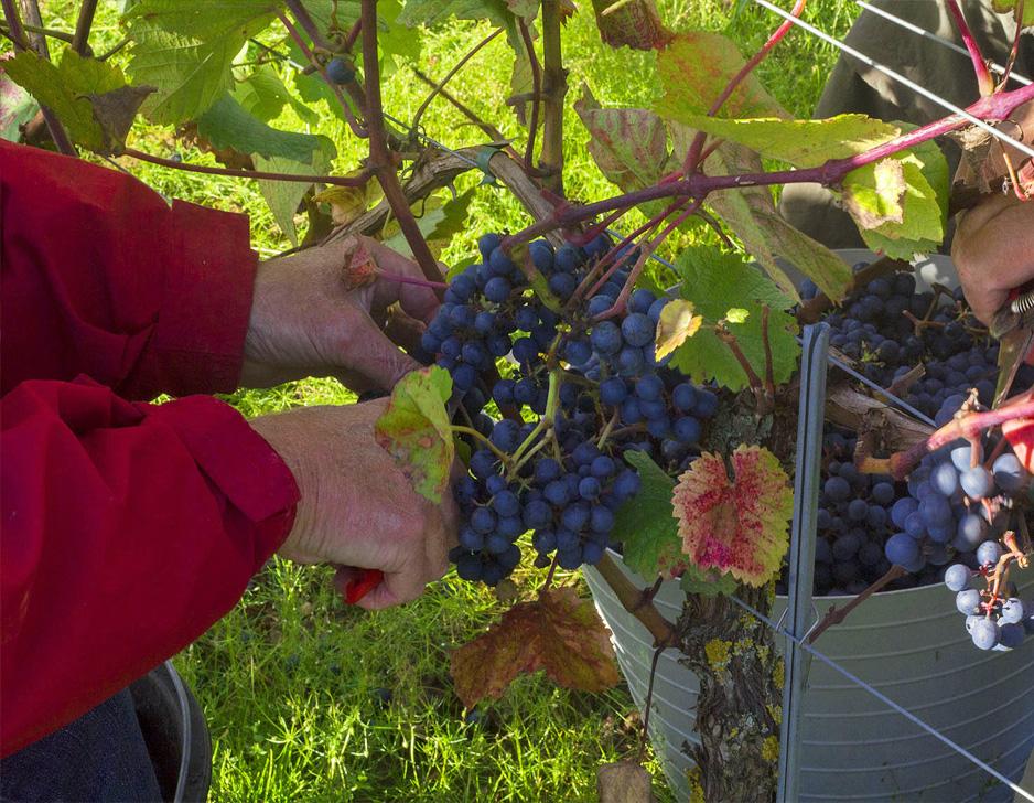 Oplev en dansk vingård hos Lindely Vingård